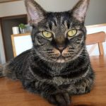 A special appeal from the editor for a cat with serious heart issues