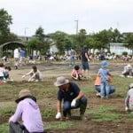 Tsukuba city recruits kids for decontamination work, then hides the photo